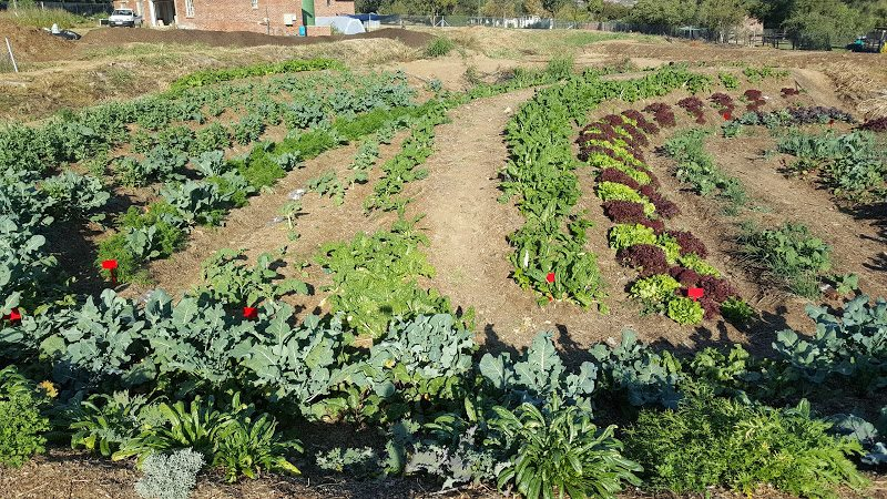 Gods Farm, Johannesburg
