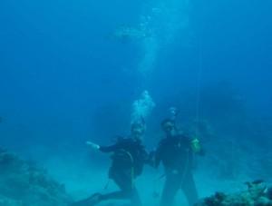diving off Mozambique and encountering potato bass